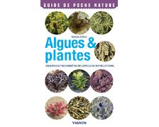 VAGNON Algues et plantes
